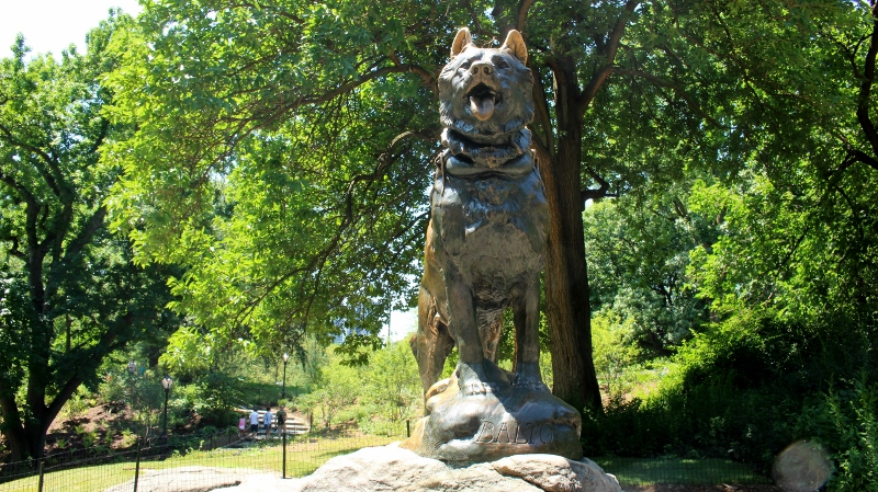 Gray-Line-New-York-Central-Park-Balto-1_800x449_2.jpg