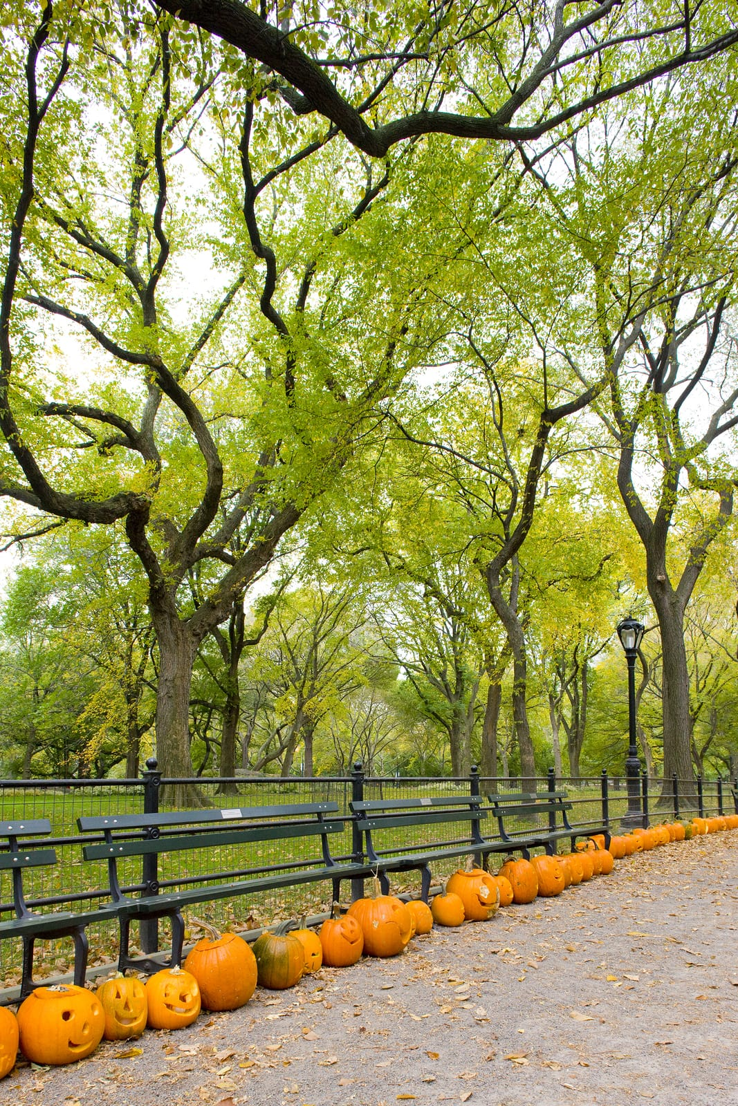 NY-autumnal-Central-Park-New-York.jpg