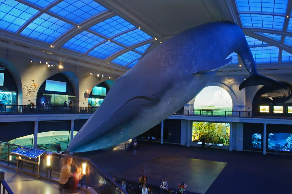 NY-iconic-blue-whale-hall-ocean-life.jpg