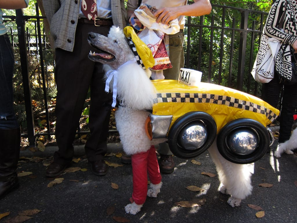 NY-yellow-cab-dog.jpg
